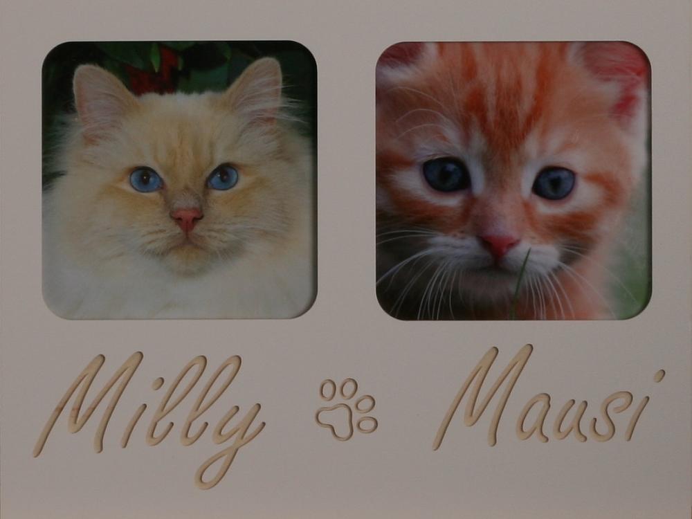 Katzenpfoten 2 Vierecke
