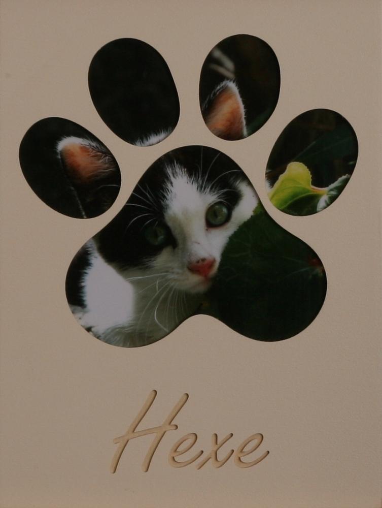 Katzenpfoten groß