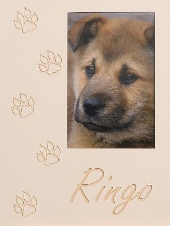 Hundepfoten 2