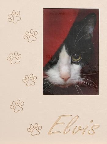 Katzenpfoten 2