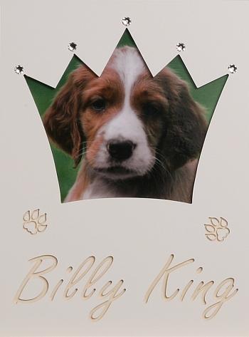 Hunde-Krone groß mit Swarovski