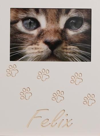 Katzenpfoten 3